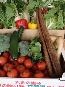 森農園の野菜たち